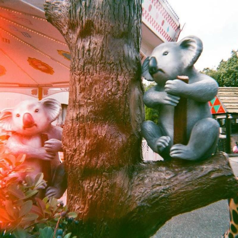 燃えるコアラ