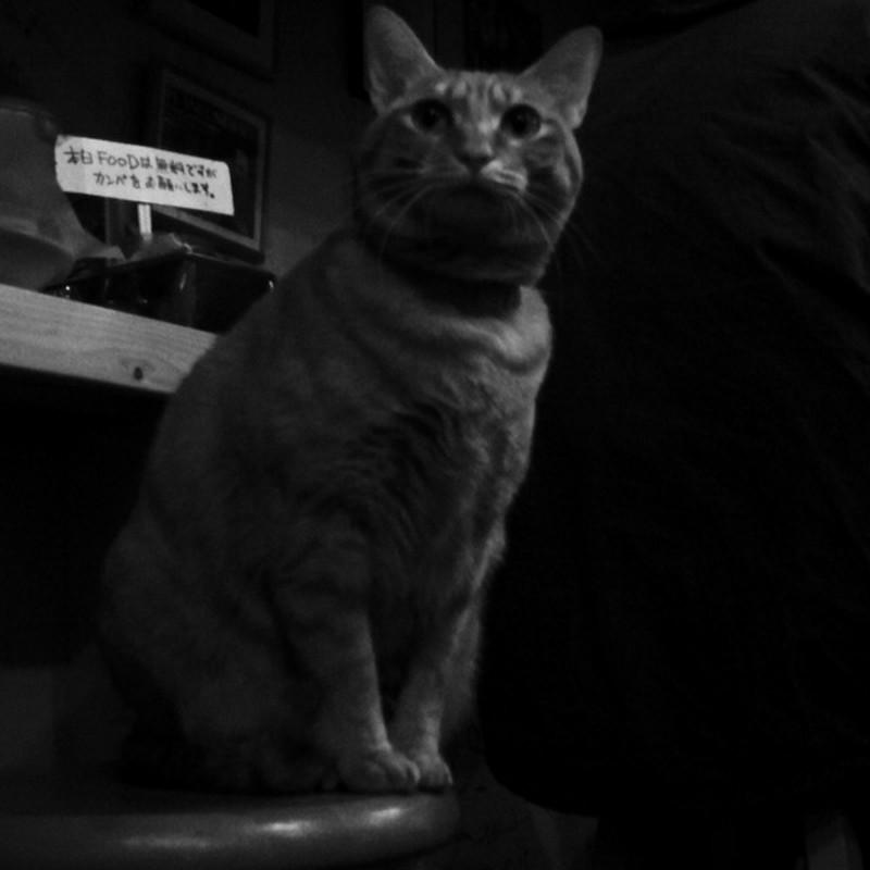 2012/11/25 カフェの猫・新宿
