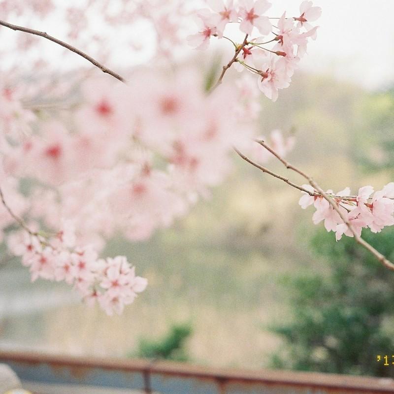 春と出会いたい。。。