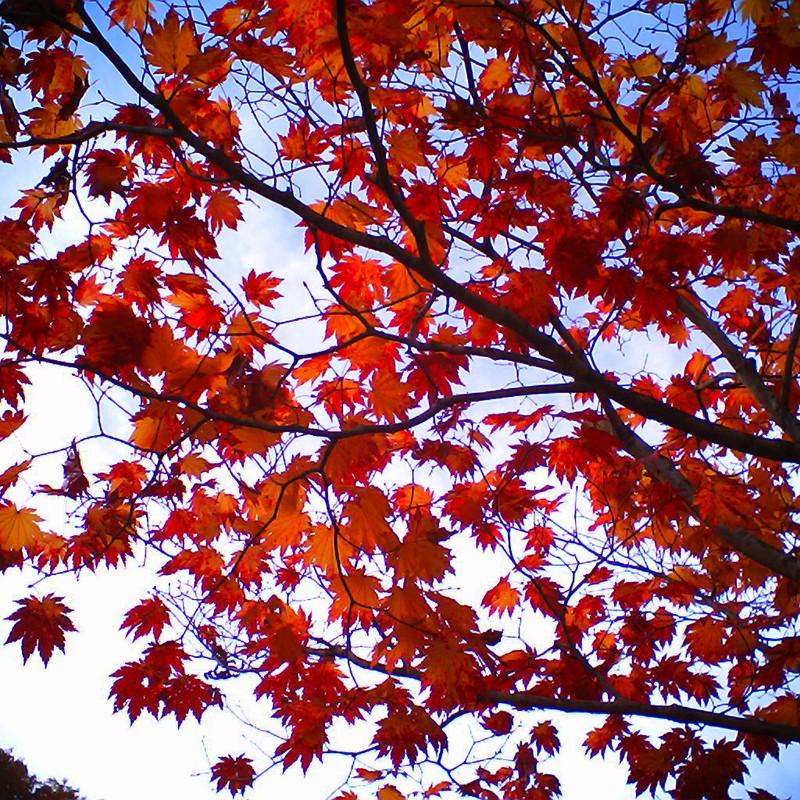 赤とオレンジと空。
