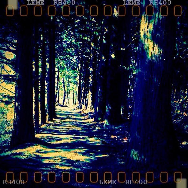 杉の小道。