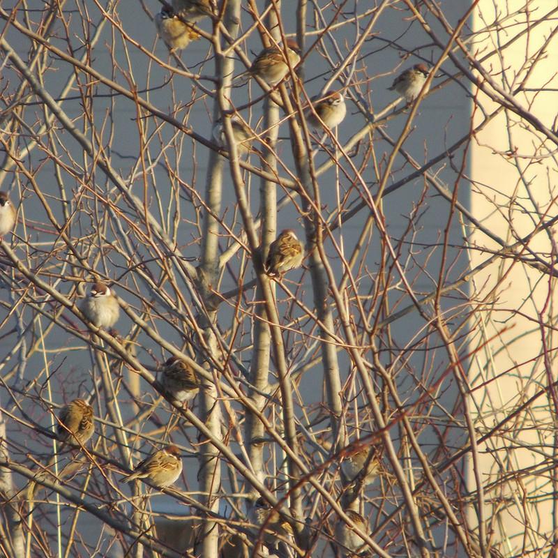 雀のなる木2014。