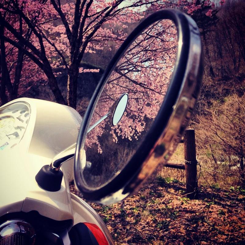 ミラーの中の桜とミラー。