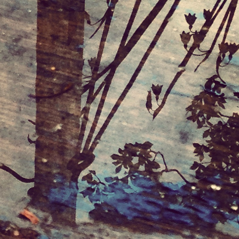 水溜りの画。