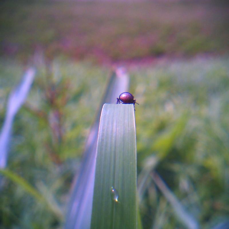 虫くん、その場所から見える風景はどんな感じ?