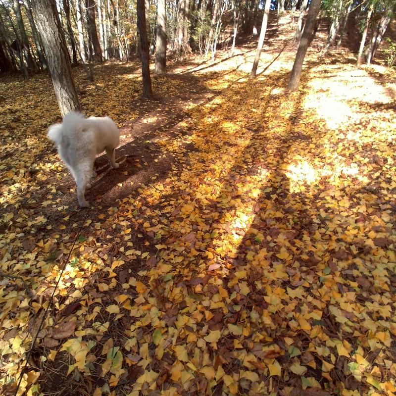 落ち葉の道。