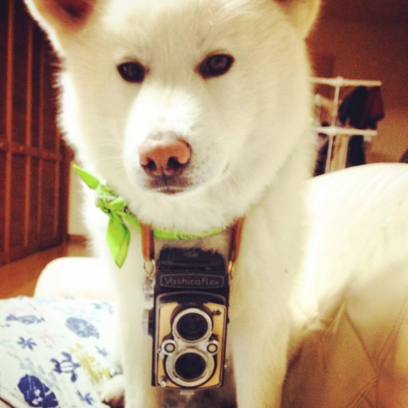 ヤシカ犬。