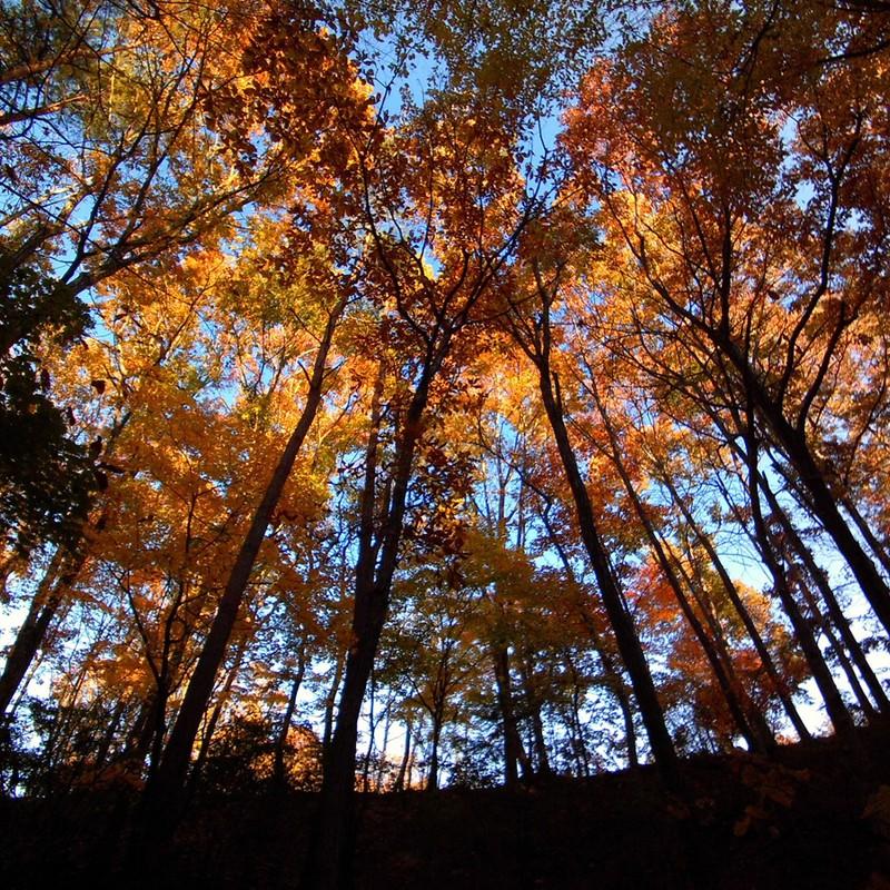 オレンジ色の森。