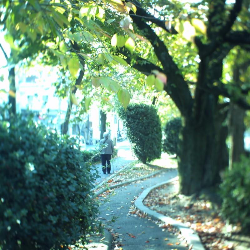 お散歩日和。