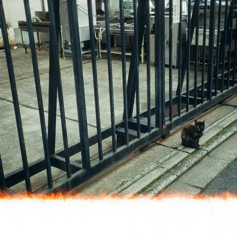 黒猫のナントカ。