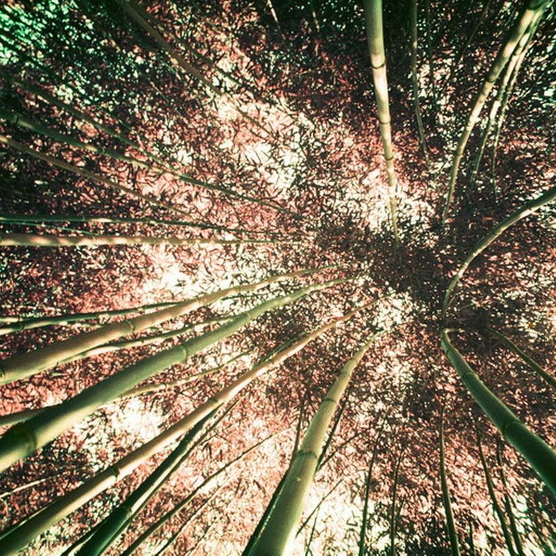 竹藪に迷い込んで。