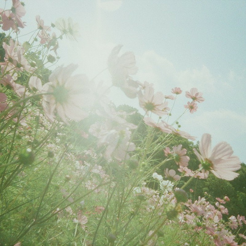 光に咲く。