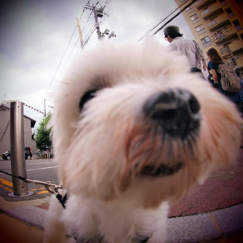 ピンボ犬。