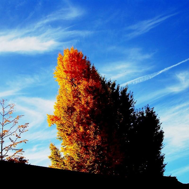 秋空の下。