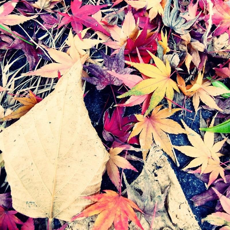 秋色いろいろ。