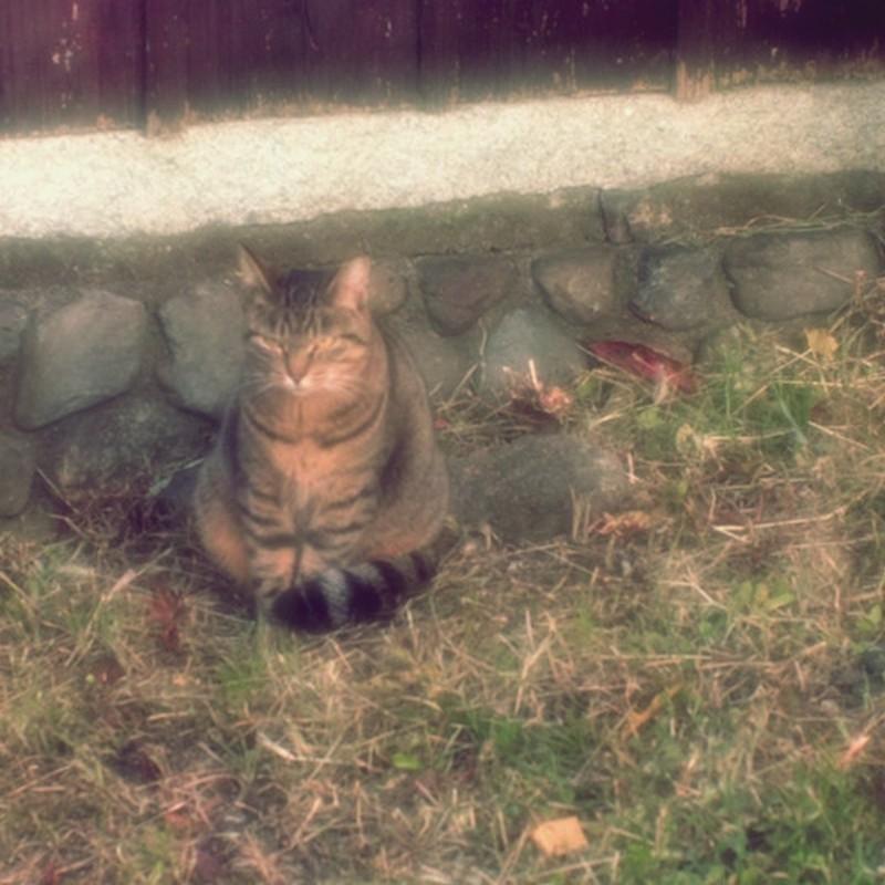 猫的正座。