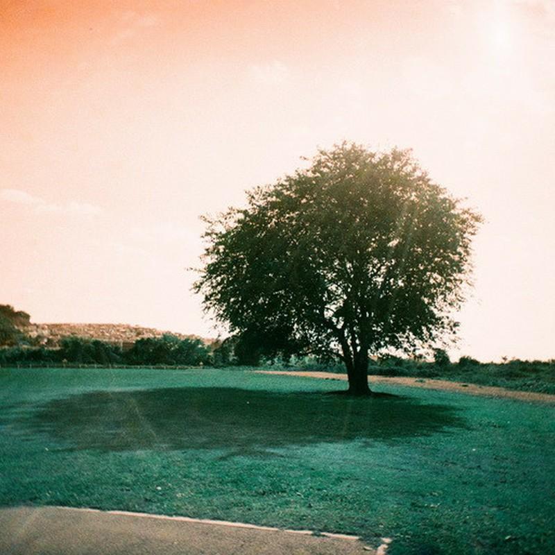 この木が撮りたくて。