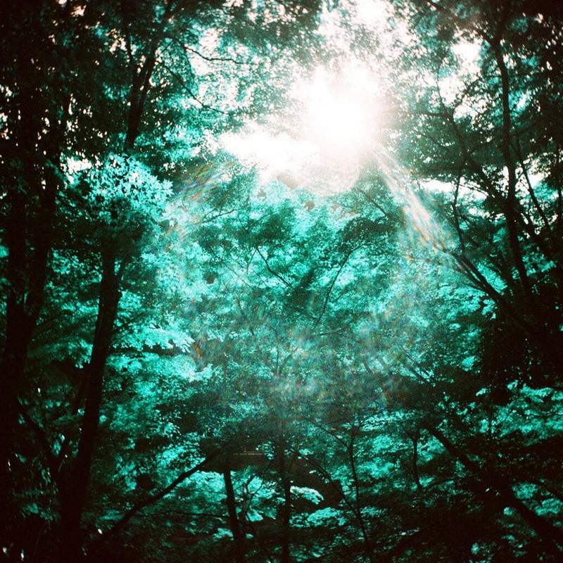 迷える森。