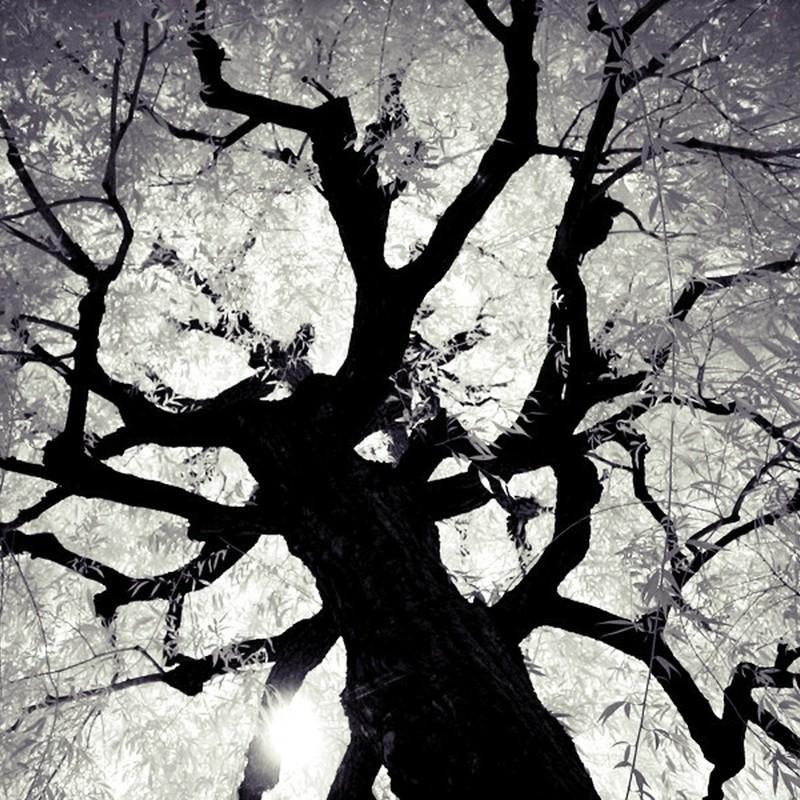見上げた樹。
