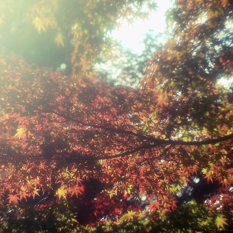 紅葉のキラキラ。