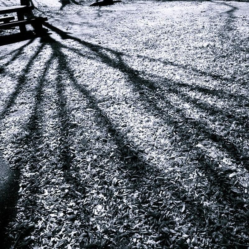 影の季節。