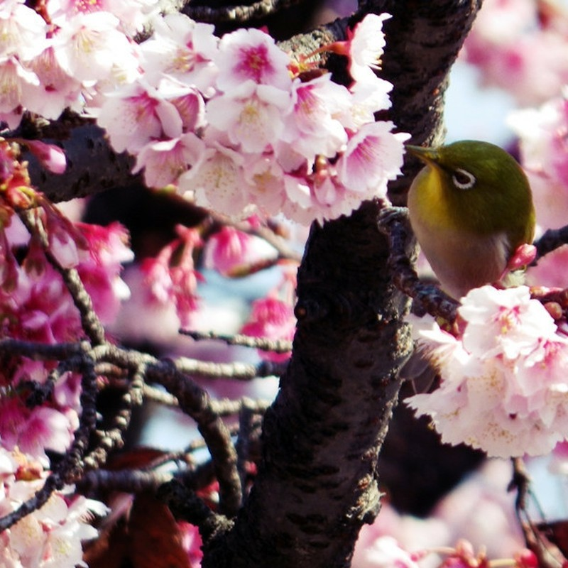 春を食す。