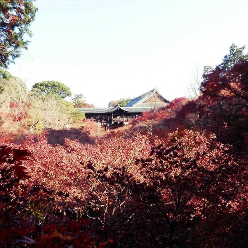 枯れ東福寺。