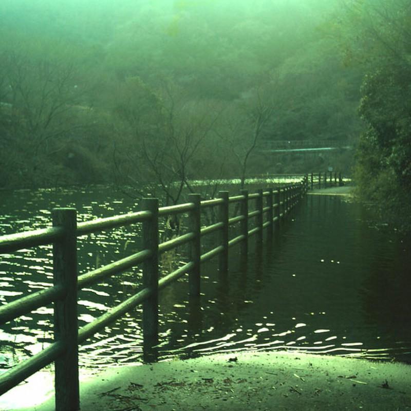 河に泳ぐ道