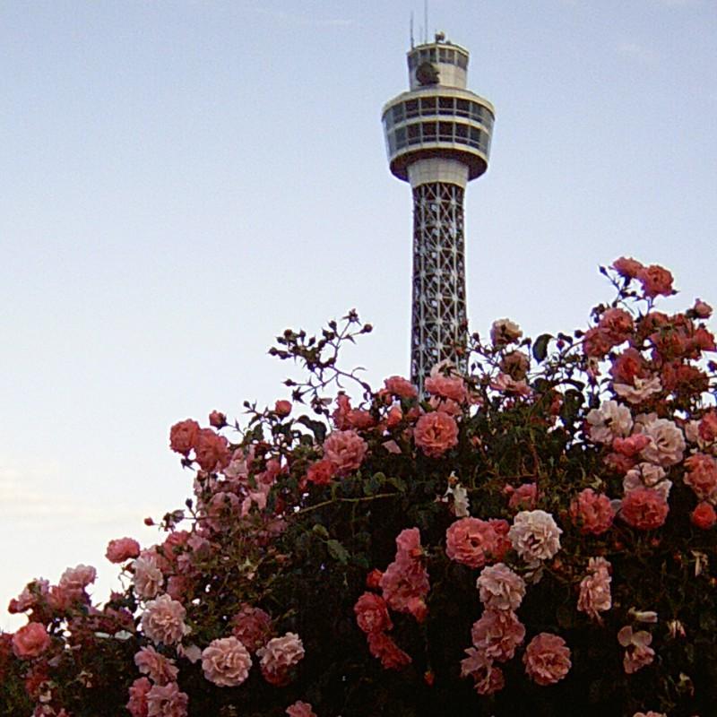 Rose Pink × Sky Blue