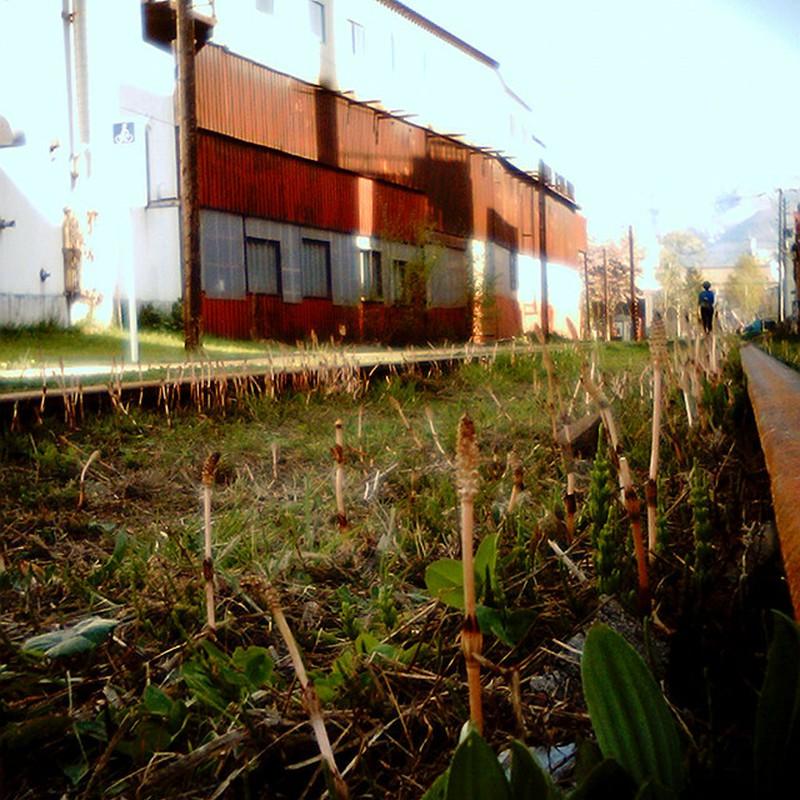 鉄路と土筆