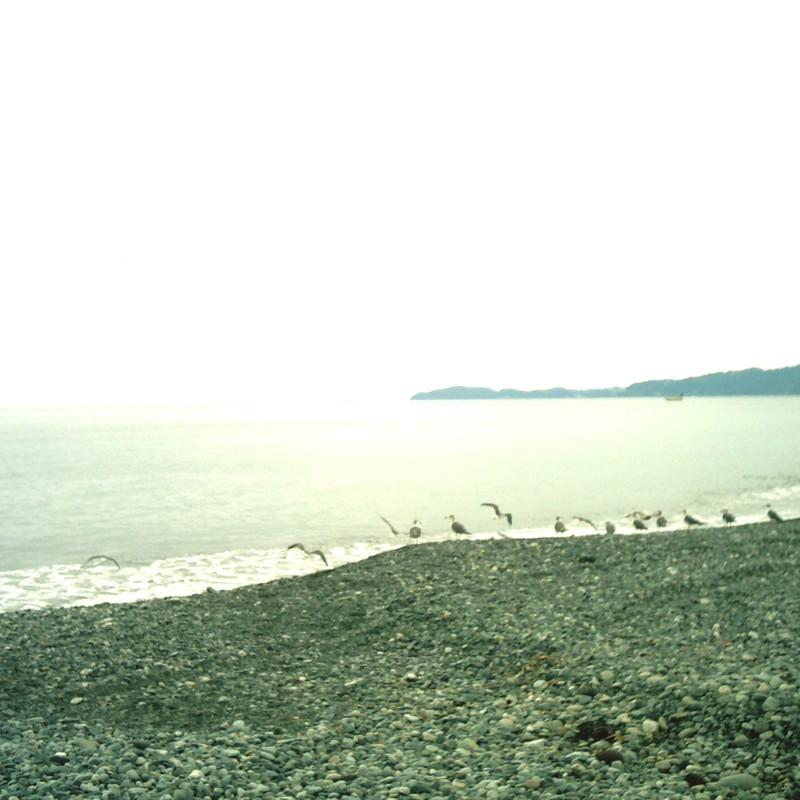 波打ち際のカモメたち