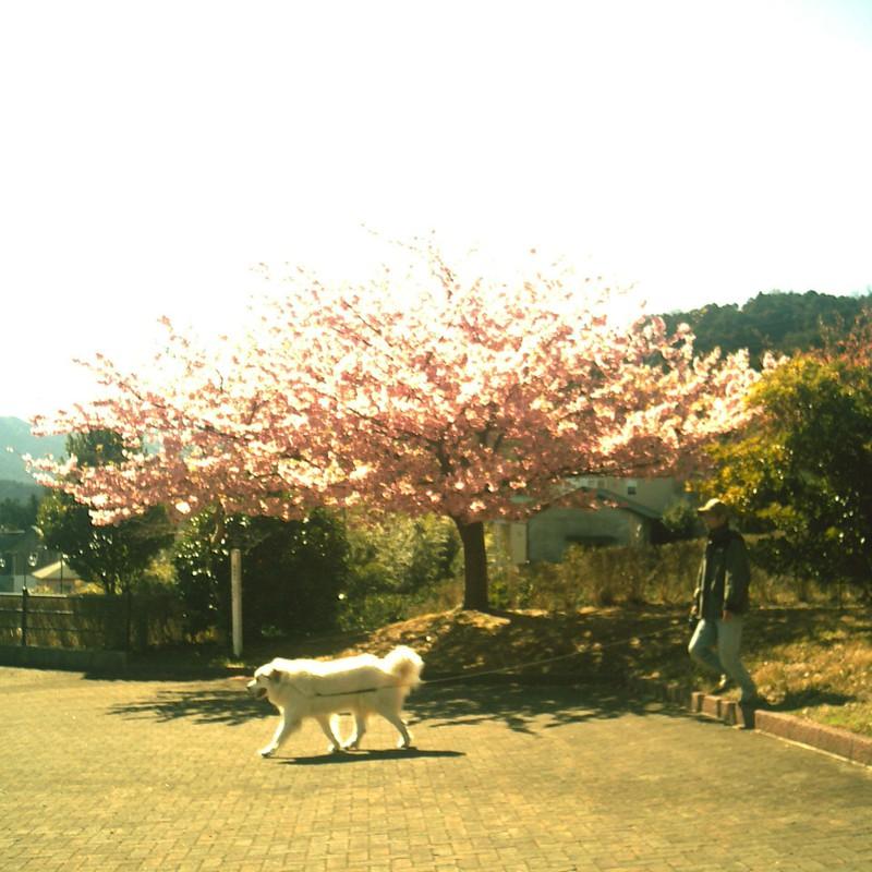 桜とジョリィ