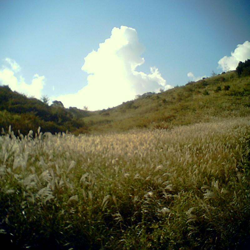 すすき野原に夏の雲