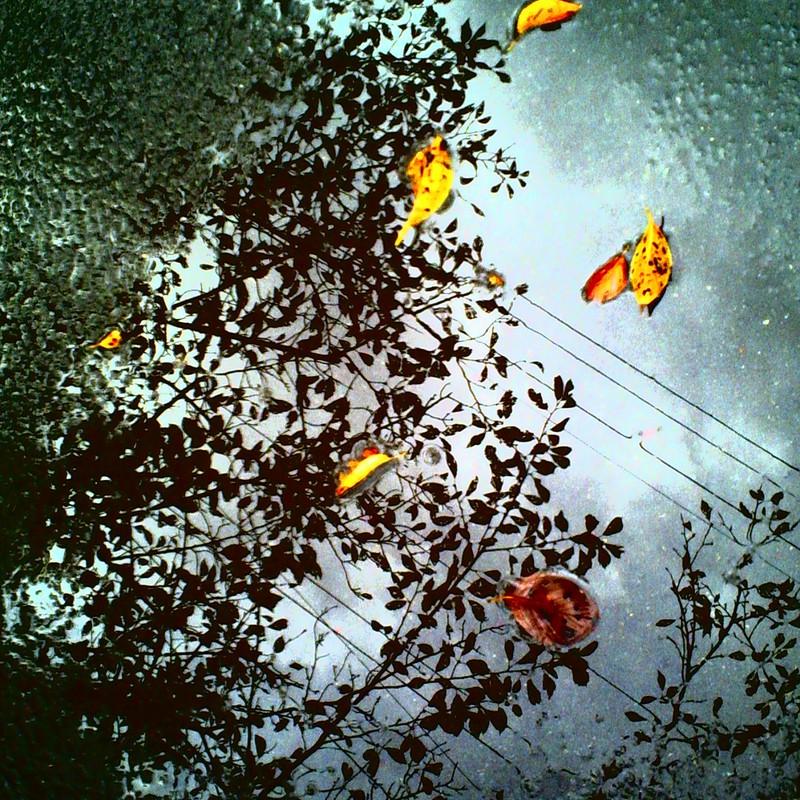 みずたまりに秋