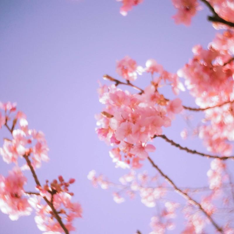 頭上にも春