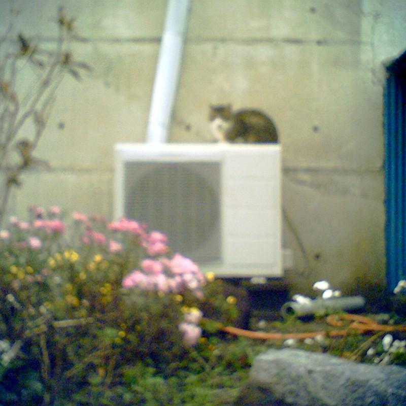 室外機の上に猫はいる