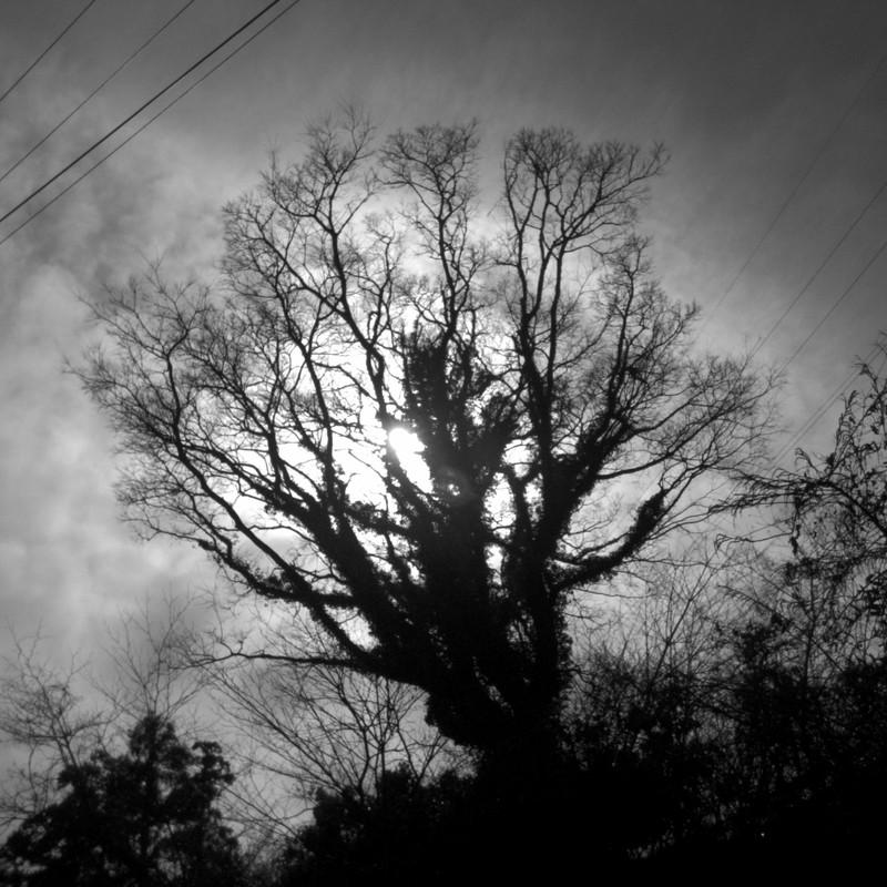 蔦絡まる木