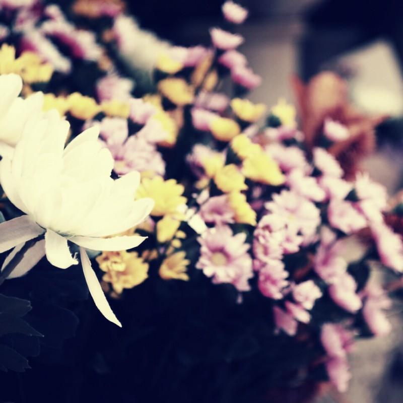 花といつも