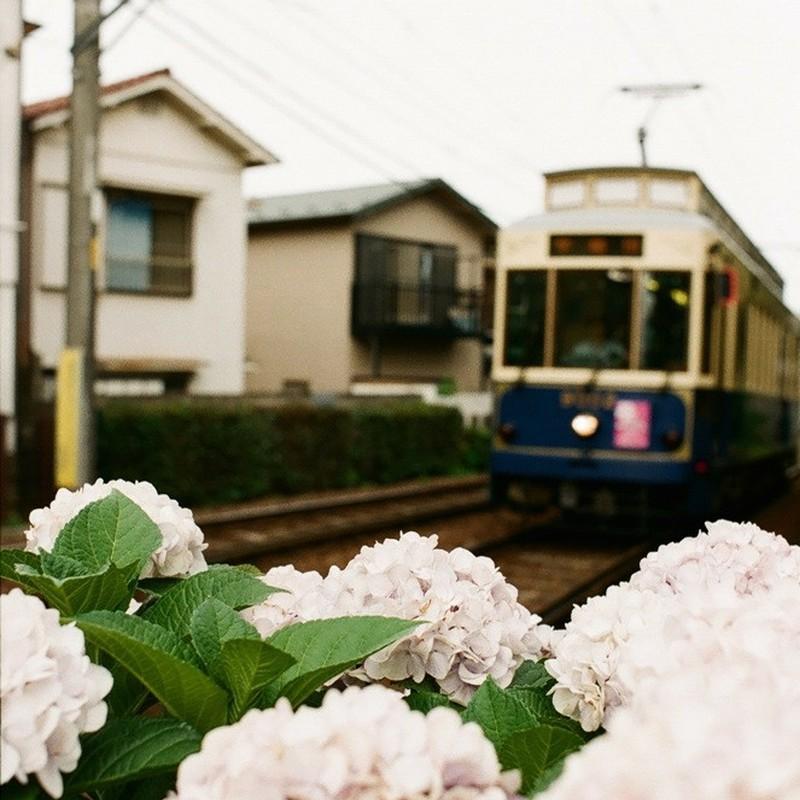 下町紫陽花風景