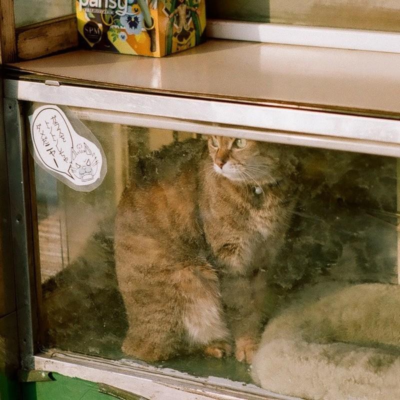 箱入り看板猫