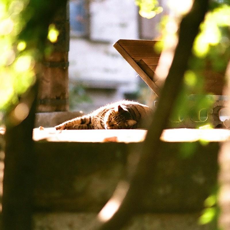 微睡のキラキラ。