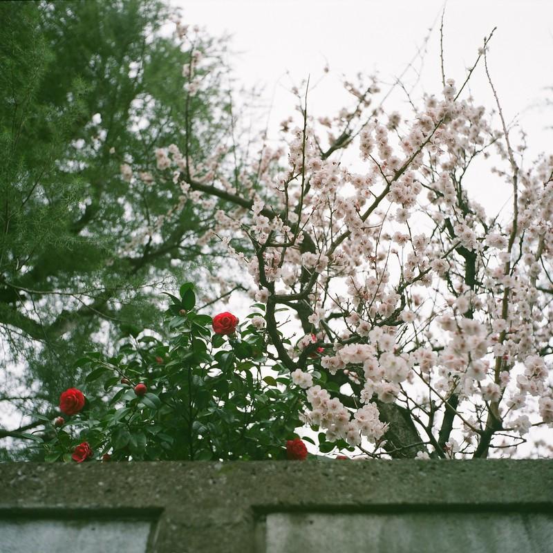 春先バトン