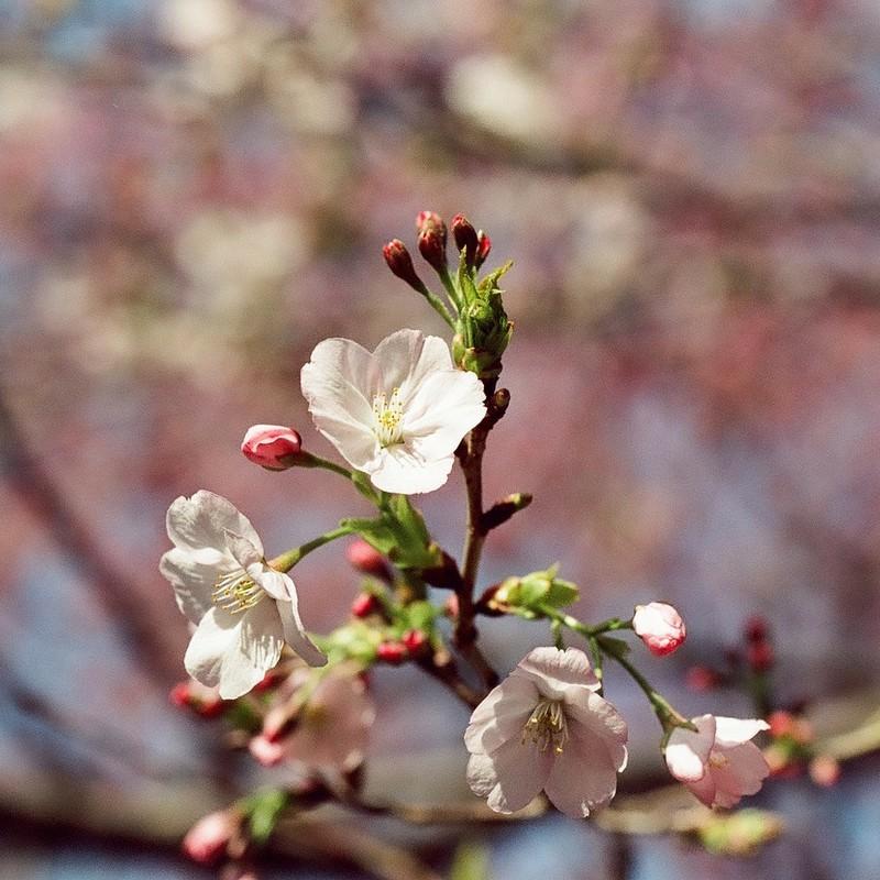 blooming :)