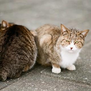 猫の日の世界