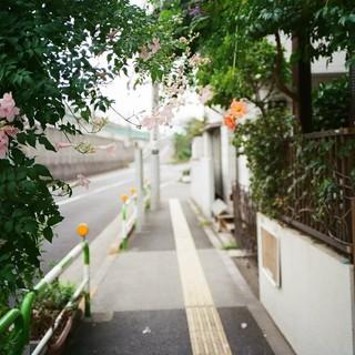 autumn gate.