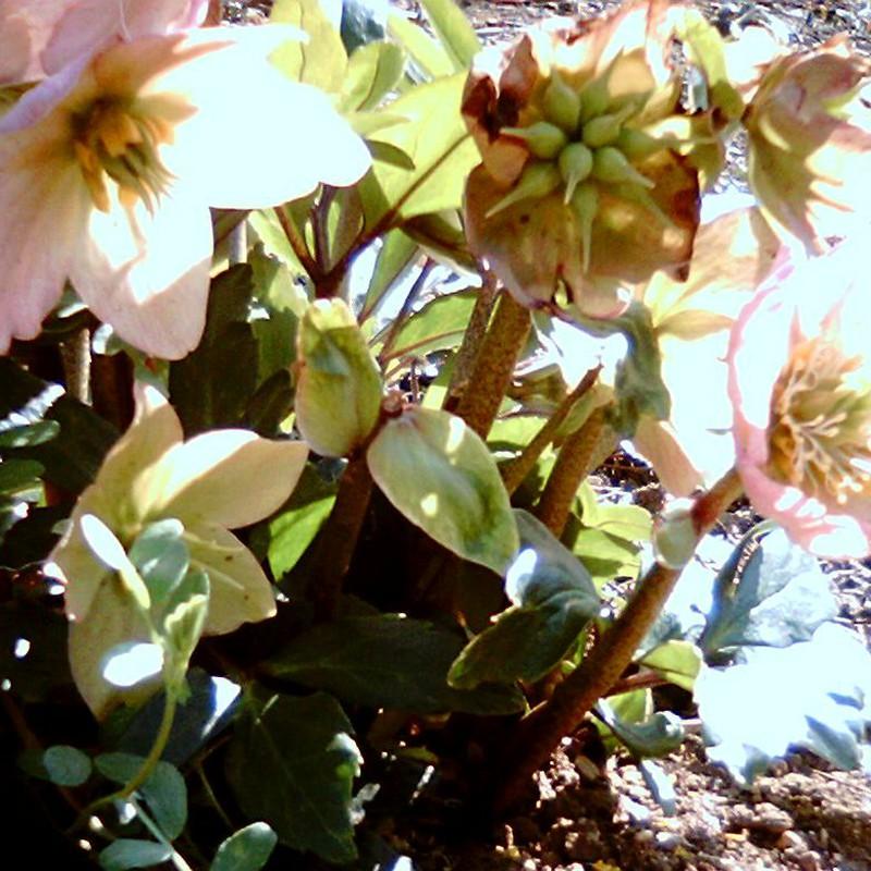 春の陽をあびて