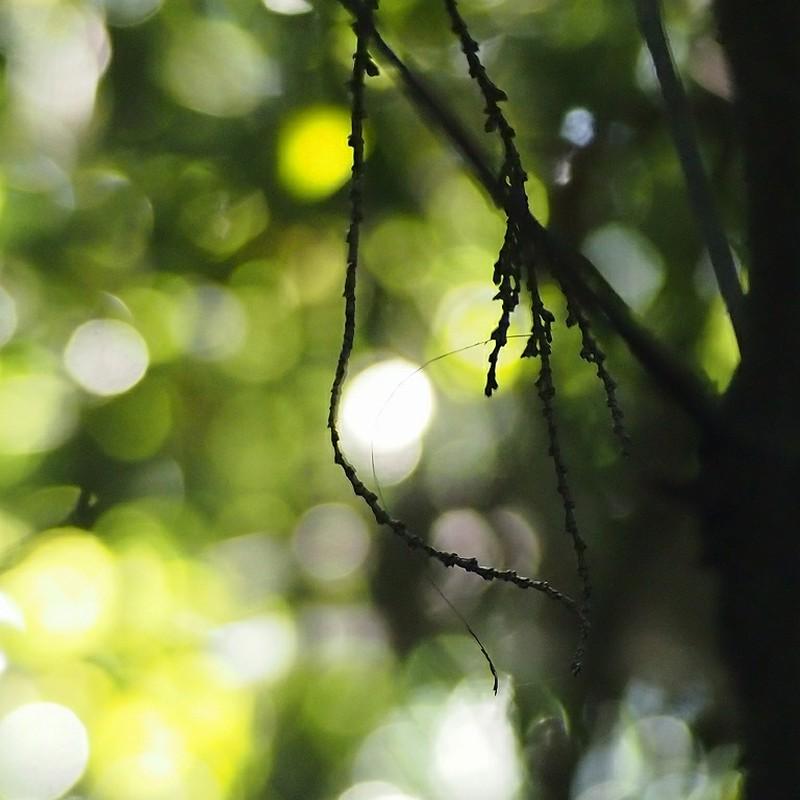 いつもの森