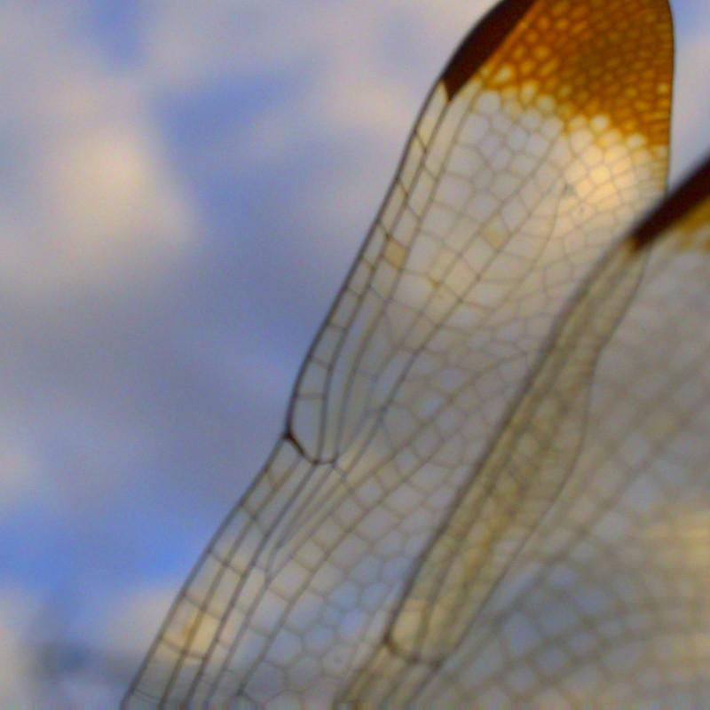 秋空ステンドグラス