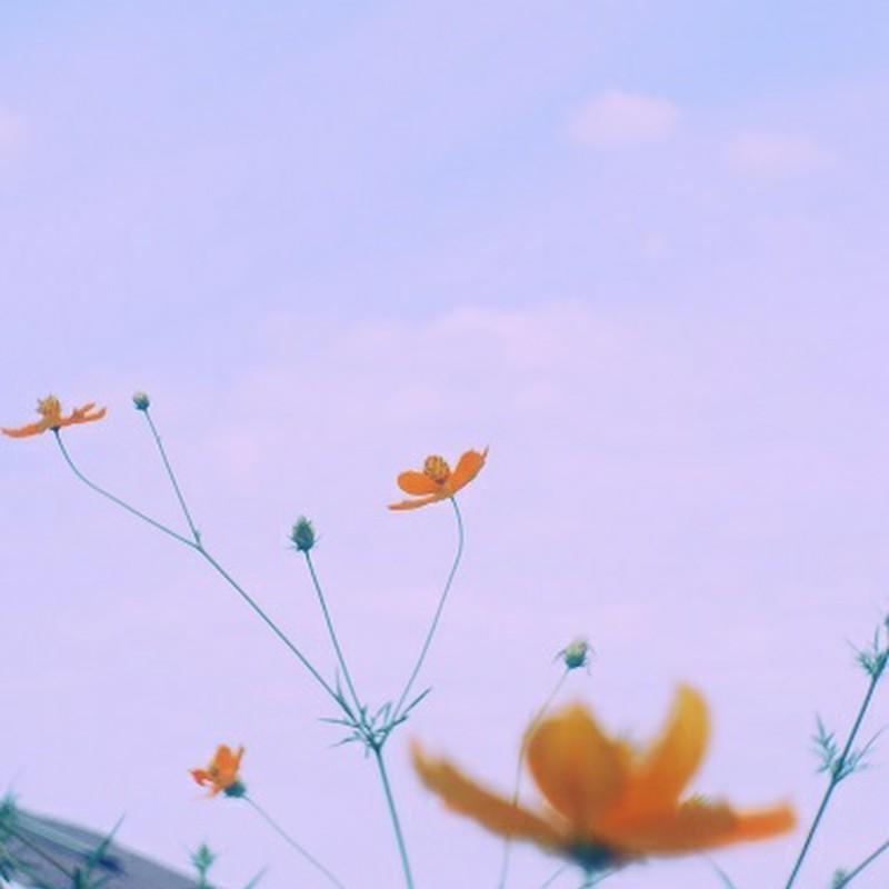 秋空へ向かって
