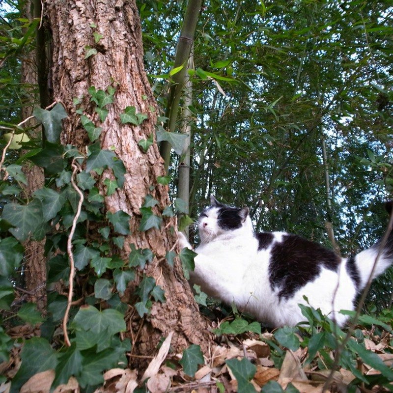 森のにゃんこ 爪とぎ がりがり